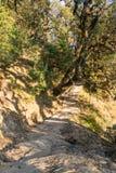 Entsteinen Sie gepflasterten Wanderweg Deoria Tal durch mäßigen Wald in den Bergen von Himalaja in Uttrakhand Stockfoto