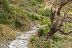 Entsteinen Sie gepflasterten Wanderweg durch mäßigen Wald in den Bergen von Himalaja in Uttrakhand Lizenzfreies Stockbild