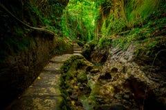Entsteinter Weg innerhalb von des Affen Forest Sanctuary, des Naturreservats und des Komplexes des hindischen Tempels in Ubud, Ba Stockbilder