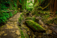 Entsteinter Weg innerhalb von des Affen Forest Sanctuary, des Naturreservats und des Komplexes des hindischen Tempels in Ubud, Ba Lizenzfreie Stockbilder