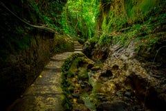 Entsteinter Weg innerhalb von des Affen Forest Sanctuary, des Naturreservats und des Komplexes des hindischen Tempels in Ubud, Ba Stockfotografie