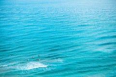 Entusiastiska surfare som simmar i havet - Jeju ö, Sydkorea Fotografering för Bildbyråer
