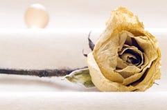 Entwässerte Rose und Kugel Stockfotografie