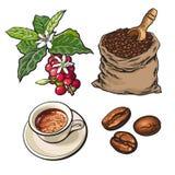 Entwicklung des Kaffees von Beeren zu Bohnen und Espresso stock abbildung