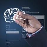 Entwicklungskonzept des menschlichen Gehirns Lizenzfreies Stockfoto