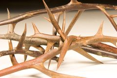 Entwined Black Loctus Thorns Royalty Free Stock Photos