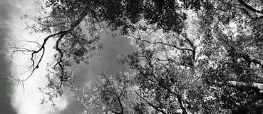 Entworfener Baum lizenzfreies stockfoto