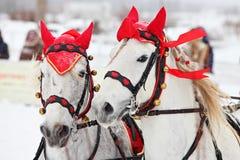 Entwurf, der das Pferdeteam bereit zu gehen fährt Stockfotos