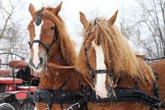 Entwurf, der das Pferdeteam bereit zu gehen fährt Lizenzfreies Stockfoto