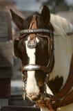 Entwurfs-Pferd Lizenzfreie Stockfotografie