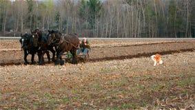 Entwurfs-Pferde Lizenzfreie Stockfotografie