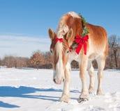Entwurfspferd, das einen Weihnachtswreath trägt Stockfotos
