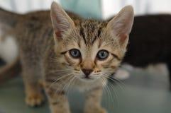 Entzückende angenommen zu werden Kitten Waiting stockbild