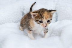 Entzückende Babykatze auf einer weichen Decke Lizenzfreie Stockfotos