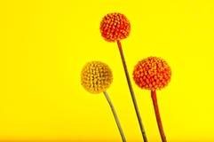 Entzückende ball-shaped Blumen. Stockfotos