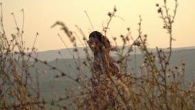 Entzückende junge Frau, die Betrieb mit ihrem netten Hund auf Natur während des Sonnenuntergangs spielt stock video