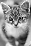 Entzückende junge Katze stockfotos