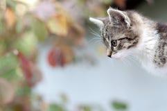 Entzückende junge Katze, die etwas überwacht lizenzfreie stockfotografie