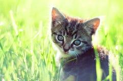 Entzückende junge Katze im Gras lizenzfreie stockfotos