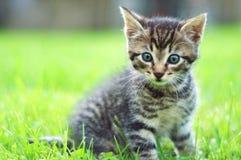 Entzückende junge Katze im Gras stockfotos