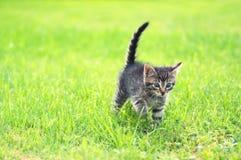 Entzückende junge Katze im Gras lizenzfreies stockfoto