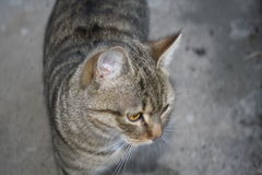 Entzückende Katze Lizenzfreie Stockfotografie