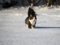 Entzückende Katze auf einem Schnee Stockfotografie