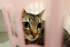 Entzückende Katze, die im Korb liegt Reizende nette Kätzchen zu Hause stockfoto