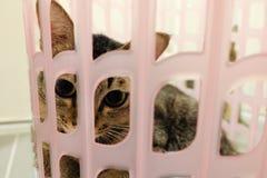 Entzückende Katze, die im Korb liegt Reizende nette Kätzchen zu Hause stockbild