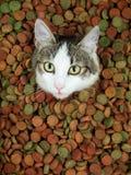 Entzückende Katze mit ihrer Zunge heraus Stockfotografie
