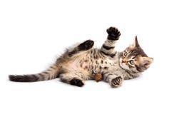Entzückende kleine Katze auf weißer Unterseite Stockfotos