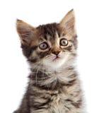 Entzückende kleine Katze auf weißer Unterseite Lizenzfreie Stockfotografie