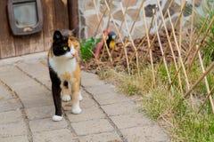 Entzückende Landkatze, die hinunter einen Steinweg auf einem Bauernhof geht Stockbilder