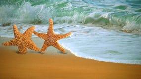 Entzückende Stern-Fische, die entlang den Strand gehen Stockfotos