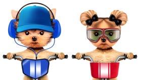 Entzückende Welpen mit den Kopfhörern, die auf Fahrrad sitzen Lizenzfreie Stockfotografie
