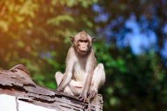 Entzückender Affe, der auf einem moderigen Holz auf unscharfem Natur backg sitzt Stockbild