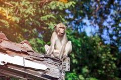 Entzückender Affe, der auf einem schimmeligen Holz auf unscharfem Natur backgr sitzt Lizenzfreie Stockfotos