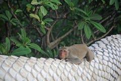 Entzückender Affe, der auf Geländerdocke sich entspannt Stockfoto