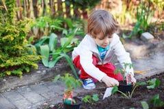 Entzückender blonder Junge, der Samen und Sämlinge von Tomaten pflanzt Lizenzfreie Stockfotografie