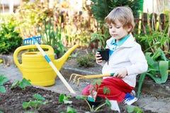 Entzückender blonder Junge, der Samen und Sämlinge von Tomaten pflanzt Stockfotografie