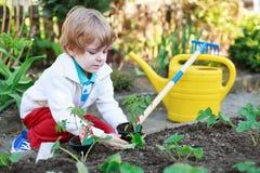Entzückender blonder Junge, der Samen und Sämlinge von Tomaten pflanzt Stockfoto