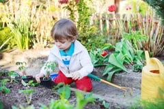 Entzückender blonder Junge, der Samen und Sämlinge von Tomaten pflanzt Lizenzfreie Stockfotos