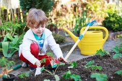Entzückender blonder Junge, der Samen und Sämlinge von Tomaten pflanzt Lizenzfreie Stockbilder