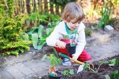 Entzückender blonder Junge, der Samen und Sämlinge von Tomaten pflanzt Stockbilder