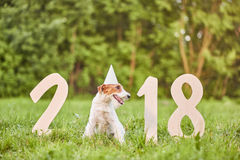 Entzückender glücklicher Foxterrierhund am greetin neues Jahr des Parks 2018 Lizenzfreies Stockbild