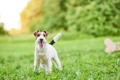 Entzückender glücklicher Foxterrierhund am greetin neues Jahr des Parks 2018 Lizenzfreie Stockfotografie