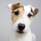Entzückender Hund Lizenzfreies Stockbild