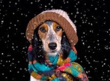 Entzückender Hund mit Hut im Schnee Lizenzfreies Stockfoto