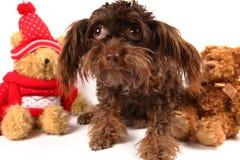 Entzückender Hund unter den Weihnachtsbären Stockfotos