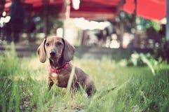 Entzückender junger Hund im Gras lizenzfreie stockfotografie